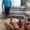 FORTALECIENDO LA AGRICULTURA FAMILIAR.